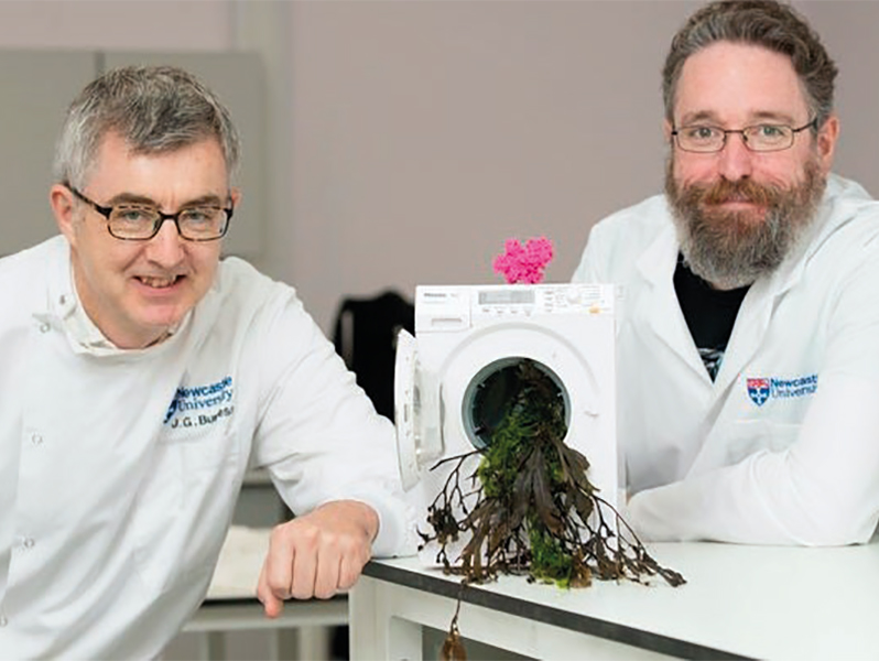 Seaweed study makes washing environmentally friendly